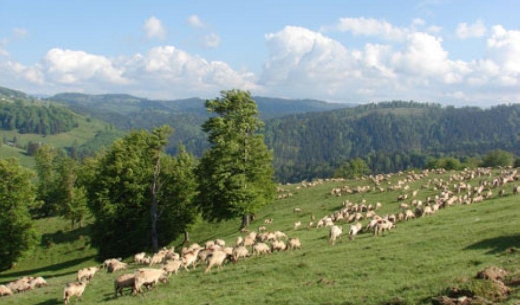SCRISOARE DESCHISĂ a proprietarilor de păduri, pășuni și terenuri agricole din Maramureș