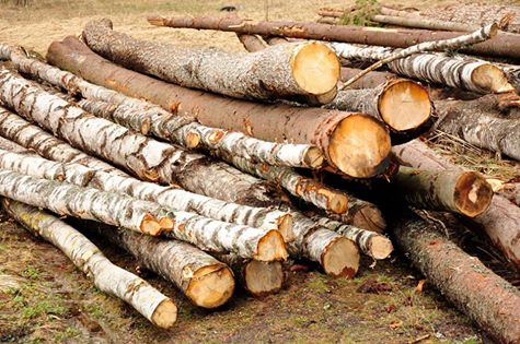 Acţiuni pe linie silvică, desfășurate în județul Maramureș