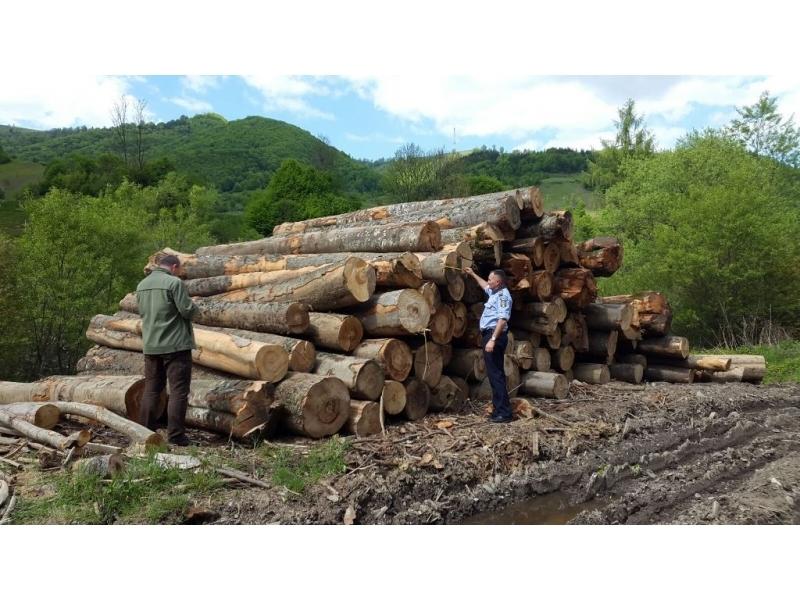 Acţiune silvică desfășurată de polițiști pe Valea Vaserului