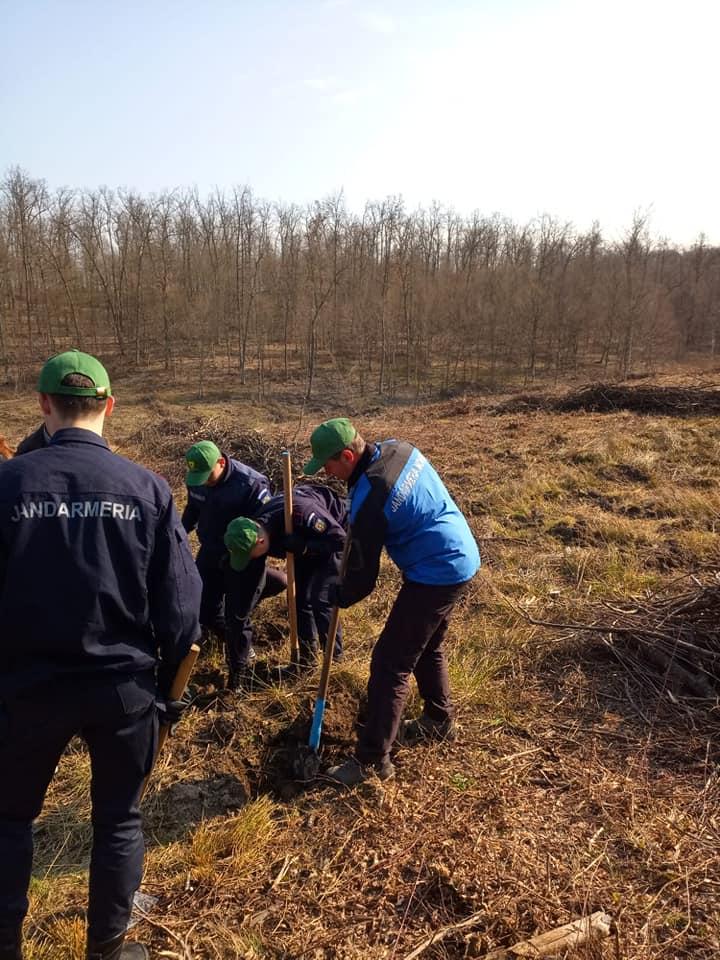 Jandarmii maramureșeni au plantat arbori în Șomcuta Mare