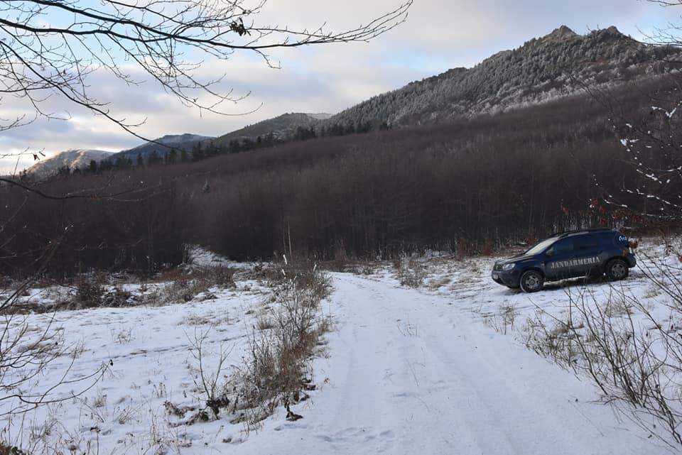 Bărbați din Șomcuta Mare amendați de jandarmi pentru tăiere ilegală de arbori